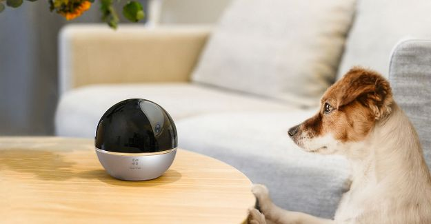 Dog looking at a Ezviz 360 camera on a table compatible with Nearsens